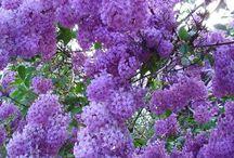 F L O W E R S   /  Joy of nature .....flower , flowers