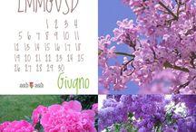 Coltivare il mio giardino / Semi , frutti ....☘