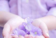 Fiori edibili / Ricette con fiori