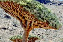 Socotra Island / Socotra Island in Yemen