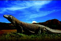 Komodo Island / Pictures of Komodo Island