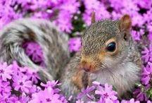 Flowers   &  Friends  ❤️☘