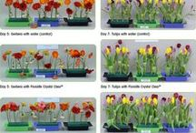 Floralife Research Updates