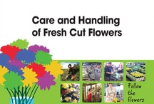 Care and Handling for flowers
