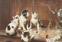 Gatti & cats