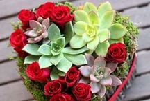 Spring, Valentines, St. Patrick's, Mardi Gras