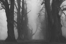 The Seeping Mist