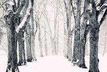l'hiver / ❄️ ❄️ ❄️