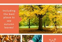 Autumn / Say goodbye to summer and hello to autumn, with our guides to making the most of the new season! From crafts and recipes, to the best autumn days out, all pins have been taken from our blog!