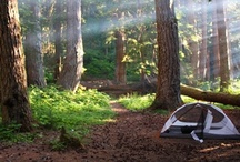 camping / by Tiffani Mattox