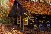 Fall into Autumn / Fallen leaves, conkers and pumpkin carving. What do you love about Autumn?