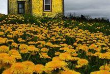 yellow / mellow yellow ... :) / by Marsha Rose /  Jamaican Beauty Blog