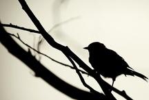 Birds / #bird / by Carolyn Gann