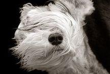 Dogs / by Kristen