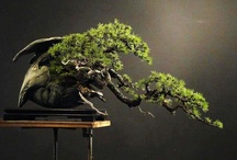 Bonsai & more / by Magnolia