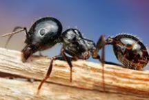 Fabulous Insects Macro!