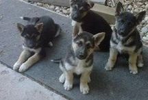 Amazing Dogs! / Lots of cute dogs!