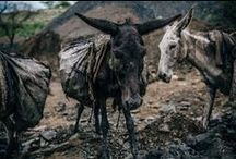 Coal mining donkeys of Pakistan6 / Last year we started working on a new project helping the coal mine donkeys of Pakistan. Here we're sharing images and stories from the project.