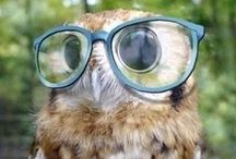 I Love Owls / Yeah, I just love them :-) I loved them even before it was so cool! ;-)