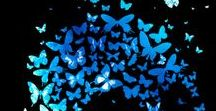 Chaos - Butterfly Theory / Conquer your chaos allows you to find your calm