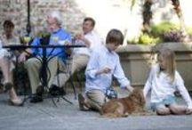 Puppies at the John Rutledge House Inn