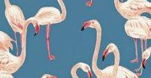 Flamingos / Flamingos, Lust auf Sommer, Vorfreude auf Florida