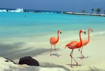 Aruba, places I've been. /  Aruba One Happy Island