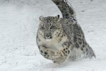 Cool Pics   Animals / Cool pics, beautiful pictures of animals or insect