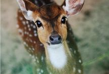 Animals / I love animals and here on Pinterest I can have my own zoo.