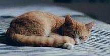 Cats / Cats, cats, cats <3