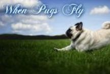 PUG FACEBOOK COVERS PUG QUOTES / Pug Dog Facebook Timeline Cover Photos For You to Use On Your Facebook Page! Fun Pug Quotes. If you have a suggestion for a cover or would like me to make a special Pug cover, leave a comment under one of my pins and I'll get back to you. / by Bailey Puggins The Pug