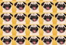PUG BACKGROUNDS TWITTER & BLOG PAGES / Use These Cool Pug Design Backgrounds For Your Twitter or Blog Pages.  / by Bailey Puggins The Pug