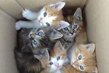 Fotos de gatos / Fotos de gatos graciosos.