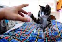 Vídeos de gatos / Encuentra los vídeos de gatos más divertidos!