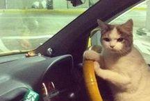 Gatos y coches