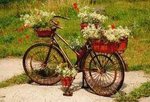 Rośliny w domu i  ogródku / pomysły na uprawę roślin w różnych miejscach i naczyniach