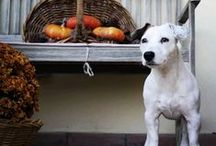 Jack Russell Terrier / Amici a quattro zampe!