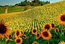 Toscana!