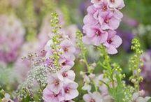 Garten: Sommerblumen / Duftende Wicken, imposante Sonnenblumen, schattenliebende Astilben und viele mehr: Sommerliche Gartenpflanzen von A bis Z