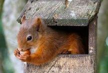 Draußen: Putzige Eichhörnchen / Wir haben für euch die witzigsten, süßesten und ausgefallendsten Fotos sowie die schönsten Produkte rund ums Thema Eichhörnchen zusammengestellt.