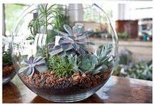 Garten: Sukkulenten / Sukkulenten, Pflanze, Deko, Aussen, Pflege, Tipps