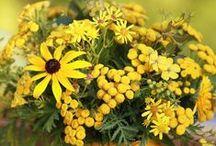 Garten: Spätsommerbeete in Gelb / Im September verwandelt sich der Garten in eine reich gefüllte Schatzkammer aus bernsteinfarbenen Blüten, Blättern und Früchten.