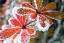 Draußen: Mystischer November / Nebelschwaden wogen, silbriger Raureif verzaubert die Landschaft und Kälte senkt sich über das Land
