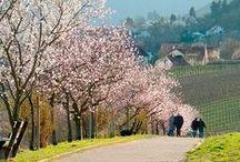 Draußen: Frühlingsstraßen / Auf duftigen Wegen vom Alten Land bis zum Bodensee schnuppern wir auf einem Ausflug zur Zeit der Mandelblüte und Obstblüte das herrliche Aroma des Frühlings.
