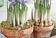 Garten: Frühlingsdeko / Wir können es kaum erwarten und dekorieren mit frischem Grün, Zwiebelblumen, fröhlich bunten Accessoires und zauberhaften DIY Ideen.
