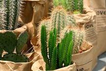Garten: Kakteen / Die stacheligen Wüstenpflanzen sind so vielgestaltig wie vielfältig einsetzbar – nicht nur im Topf machen Kakteen eine gute Figur.