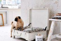 """Wohnen: Hund im Glück / Begleitendes Board zu unserer Zeitschrift """"Hund im Glück"""""""