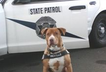 K-9 Police Dogs / Some cool police dogs!