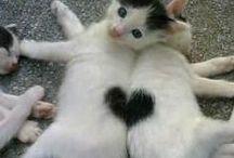 ~ Cats~