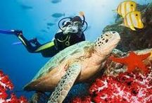 Red Sea Diving, El Gouna